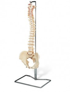 Simple spine with stand
